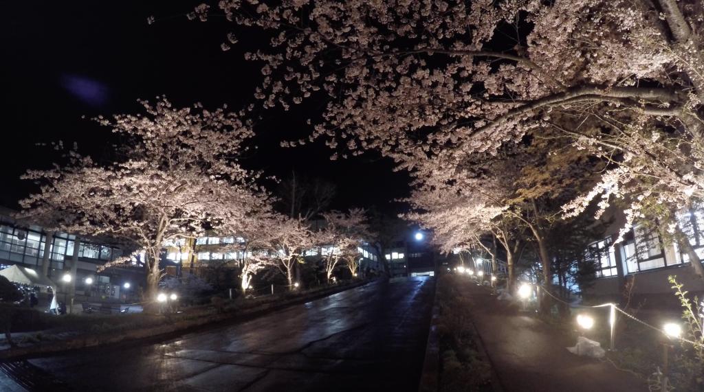 商大桜夜桜